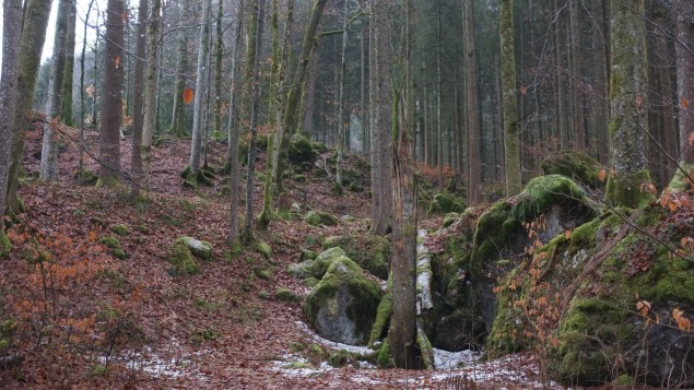Der lachende Wald