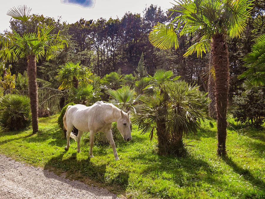 weiße pferd - beate Dölling