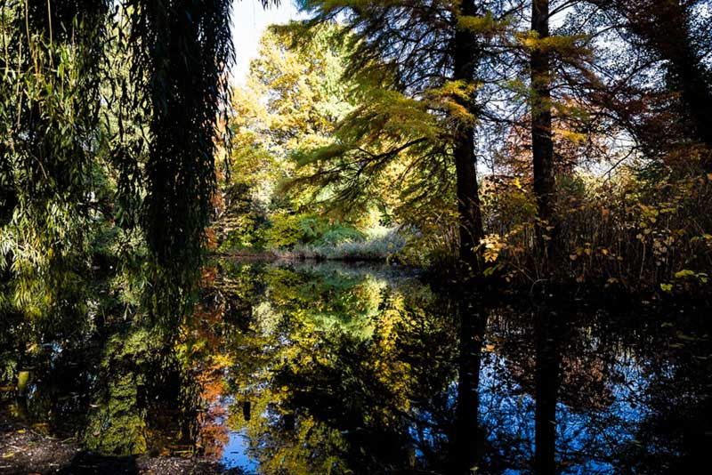 Wald - foto Didier Laget